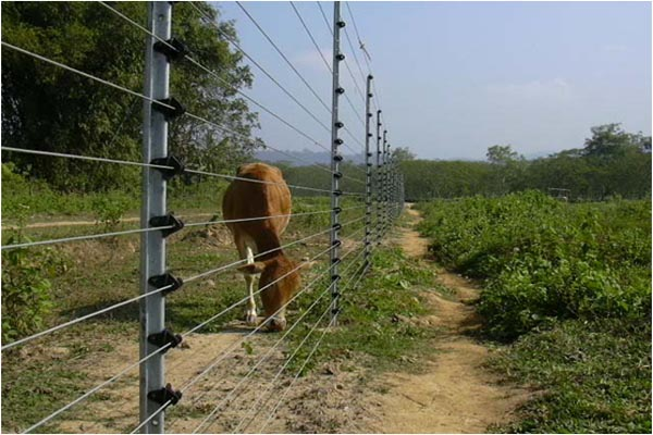 ANIMAL POWER FENCING